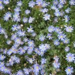 """Last flowers before winter"" by prajuvikas"