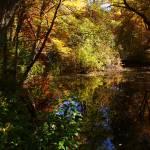 """""""Fall Color"""" by binasveda"""