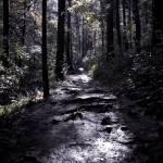 """The Enchanted Forest"" by slashnburn"