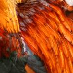 """Feathers 2"" by kenart"