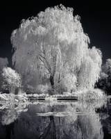 willow_098ir_imagekind