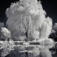 """willow_098ir_imagekind"" by unclaimedmysteries"