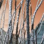 """Desert Cactus"" by imagedance"