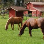"""Blickle-Livengood Farm"" by HorsesForCleanWater"