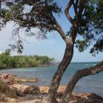 """Guanica Beach"" by angelarichardson"