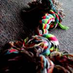 """Colourful Dog Toy"" by SophieT"