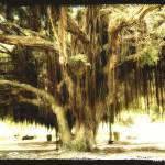 """Banyan Tree"" by Norm"