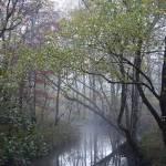 """""""Fall Stream in Fog"""" by jones3006"""