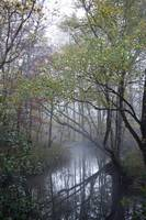 Fall Stream in Fog