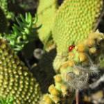 """""""cacti ladybug"""" by amoration"""