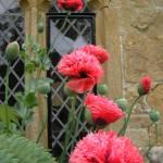 """English Garden"" by LISATRAVELBUG"
