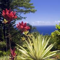 Maui Garden Art Prints & Posters by Bart Everett