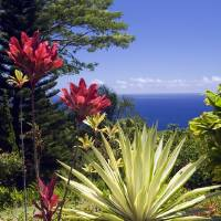 Maui Garden Art Prints & Posters by Bart Everett