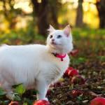 """White kitten in apple orchard"" by ovlov"