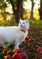 White kitten in apple orchard