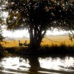 """""""Foxton Locks"""" by TheD70sisters"""