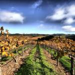 """Gallo Sonoma_DryCreek_12 04 08 (7)"" by photosylesje"