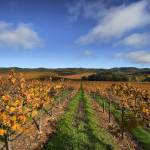 """Gallo Sonoma_DryCreek_12 04 08 (10)"" by photosylesje"