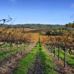 """Gallo Sonoma_DryCreek_12 04 08 (18)"" by photosylesje"