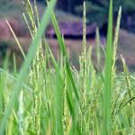 """""""Green"""" by rupesh"""