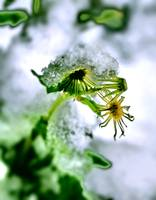 Green With ice 2