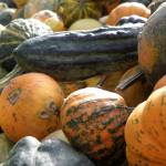"""Gourds"" by ajkartworks"