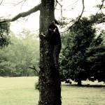 """""""Tree Tops"""" by julieroselc"""
