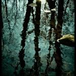 """""""enchanted forest"""" by dakotamorrison"""