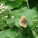 """""""Butterfly"""" by xwizbt"""