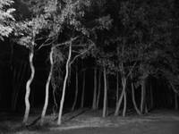 Woods at Night I