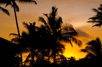 Hawaiian palm trees in the sunset