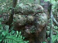 Mysterious Face in the Rainforest
