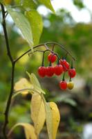 Berries in Mudlake