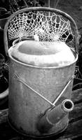Watering Can with Frosty Spiders' Webs (BW)