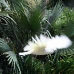 """Bird in Flight"" by OvertonePhotography"