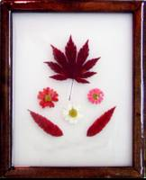 Japanese Maple - Sumac - Daisies