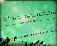 bird convention