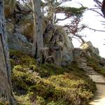"""Point Lobos Stairway Heaven"" by BobFikePhoto"