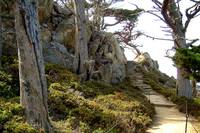 Point Lobos Stairway Heaven