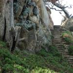"""Point Lobos Stairs"" by BobFikePhoto"