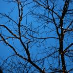 """Tree Silhouette with Blue Sky"" by BobFikePhoto"