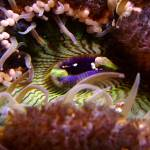 """Ocean Anemone II in Santa Cruz"" by BobFikePhoto"