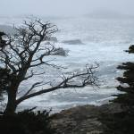 """Point Lobos Grey Mist"" by BobFikePhoto"