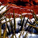 """""""Snow and Yucca, Red Rock Canyon"""" by PadgettGallery"""