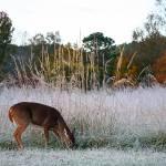 """""""Deer in a Frosted Field"""" by jones3006"""