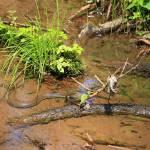 """Snake in the Water"" by jones3006"