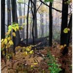 """Thru The Fog"" by joelpatrick"