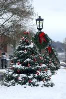 Christmas Trees, Wellsboro, PA