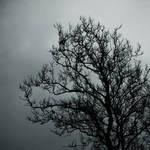 """A Fine Specimen of Tree"" by iubirephotography"