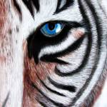 """White Bengal Tiger"" by cuky"